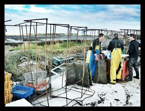 Oyster Farm, Ireland