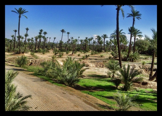 Date Farm at the edge of Marrakech